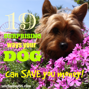 19 Surprising ways your dog can SAVE you money!